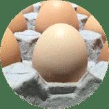 Huevo1-Circulo